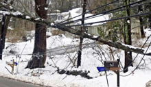 fallen tree on power lines during the winter